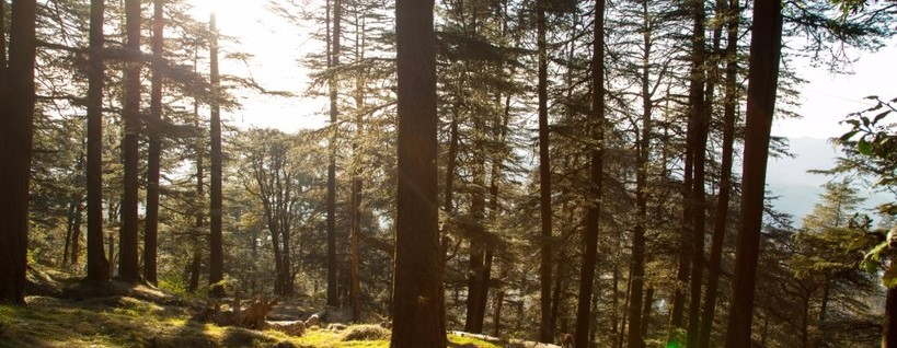 Shimla – Day Picnic in Glen Shimla_820x318